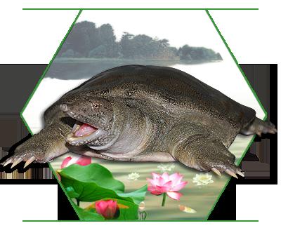 吃甲鱼你还担心过敏吗?看完这篇文章你就明白了!